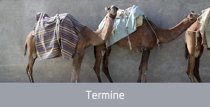 Kamele, Text: Termine